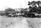 農家の周りには屋敷林が、背後には雑木林が広がっていた。