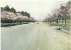 8枚1組。カラー写真にて国立市内の名所風景を見ることができる絵葉書。<br /> <br />